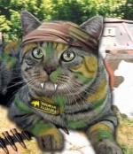 Боевые Коты и Кошки Продаж :) (Тренинг активных продаж ).
