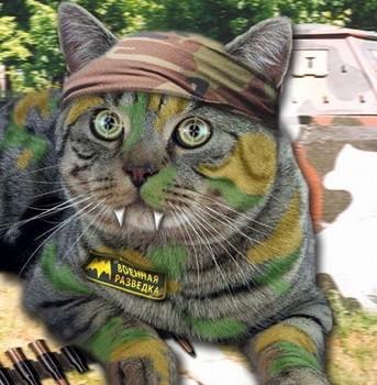 Скачать Игру Боевые Коты - фото 9